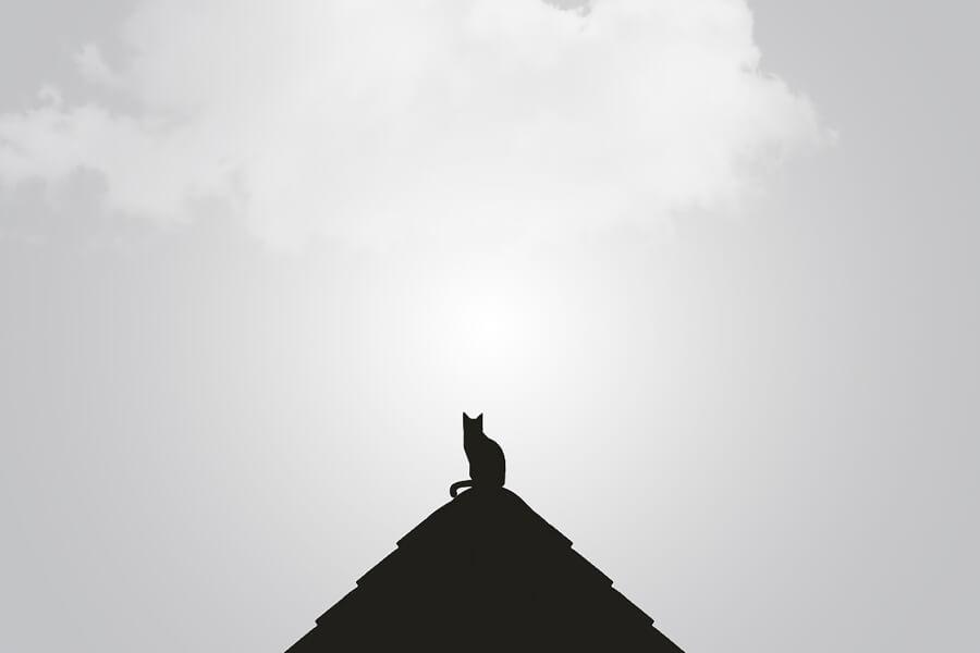 gato en una piramide